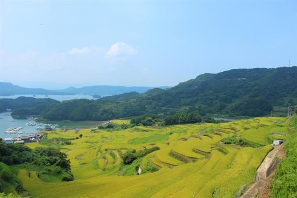 佐賀県で即日現金化が可能な業者を徹底調査!